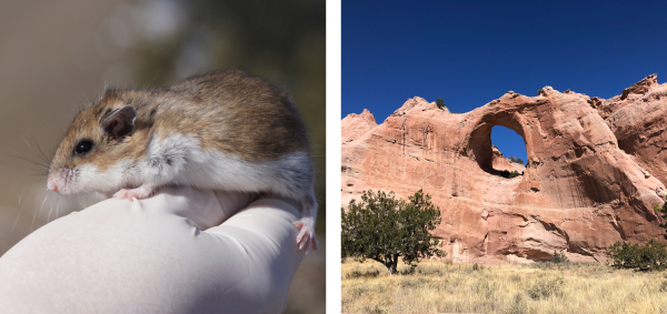Mouse (left); Navajo Nation (right)